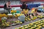 Alojietes 16. Starptautiskajā ziedu paklāju festivālā Ventspilī. Foto:Liene Čečiņa, Rasma Oinaskova, Guna Krūmiņa