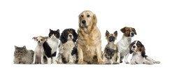 Atgādinājums par suņu un kaķu vakcināciju, čipošanu un reģistrēšanu