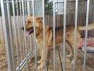 Braslavas pagasta Vilzēnos atrasts suņu puika. Meklē sunīša saimnieku.