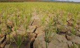 Lauksaimniecībā noteikta valsts mēroga katastrofa