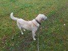 """Staicelē pie mājām """"Megras"""" atrasts balts suns"""