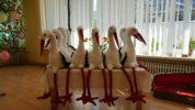 Aizvadīti Svēta putna svētki Staicelē