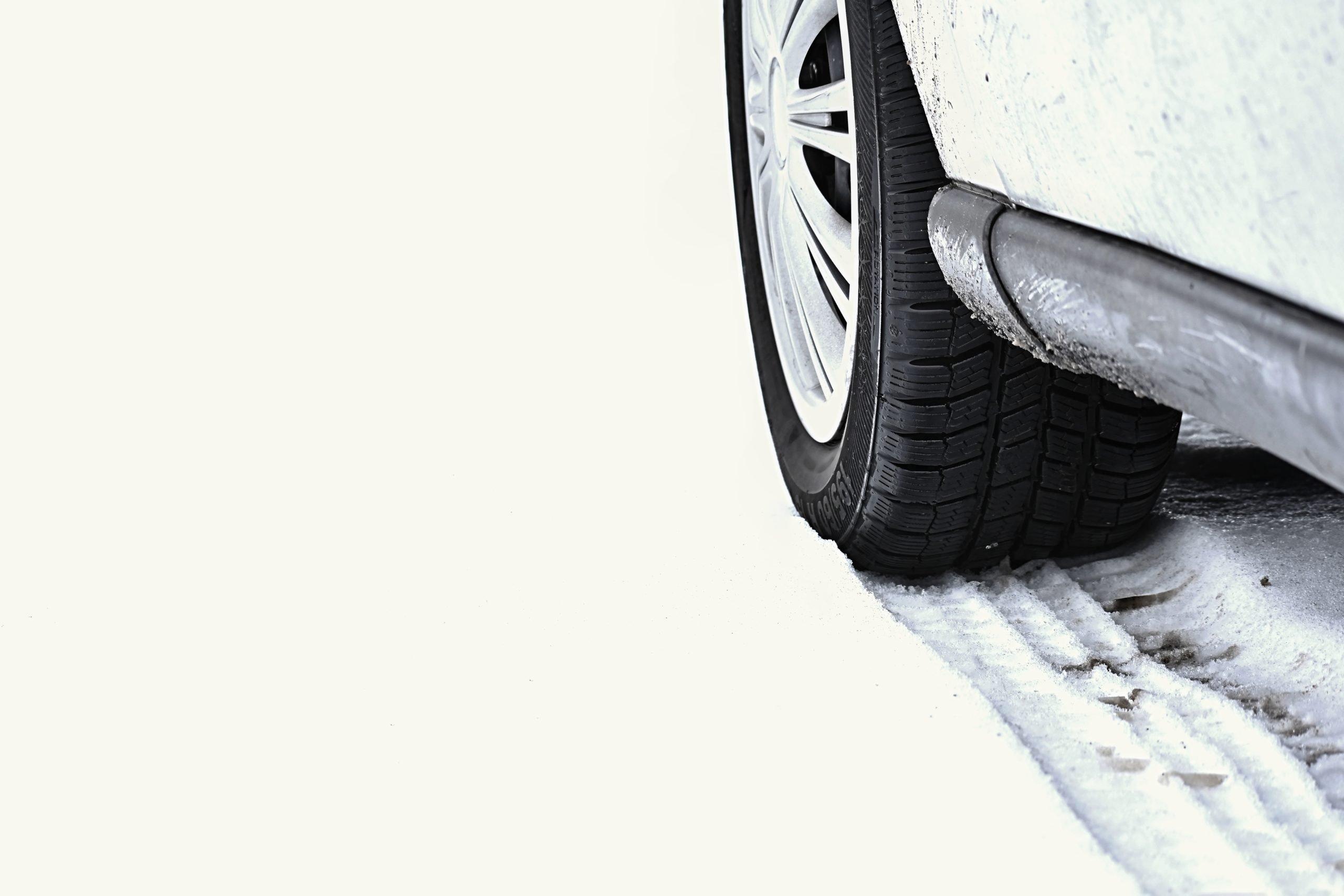 Autobraucēju ievērībai: uz ceļiem var sastapt meža dzīvniekus, kuri iznāk pēc sāls