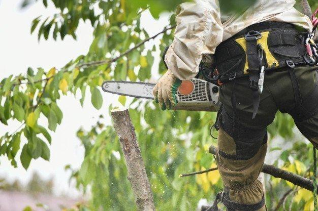 Alojas pilsētas teritorijā izzāģēs bīstamos kokus