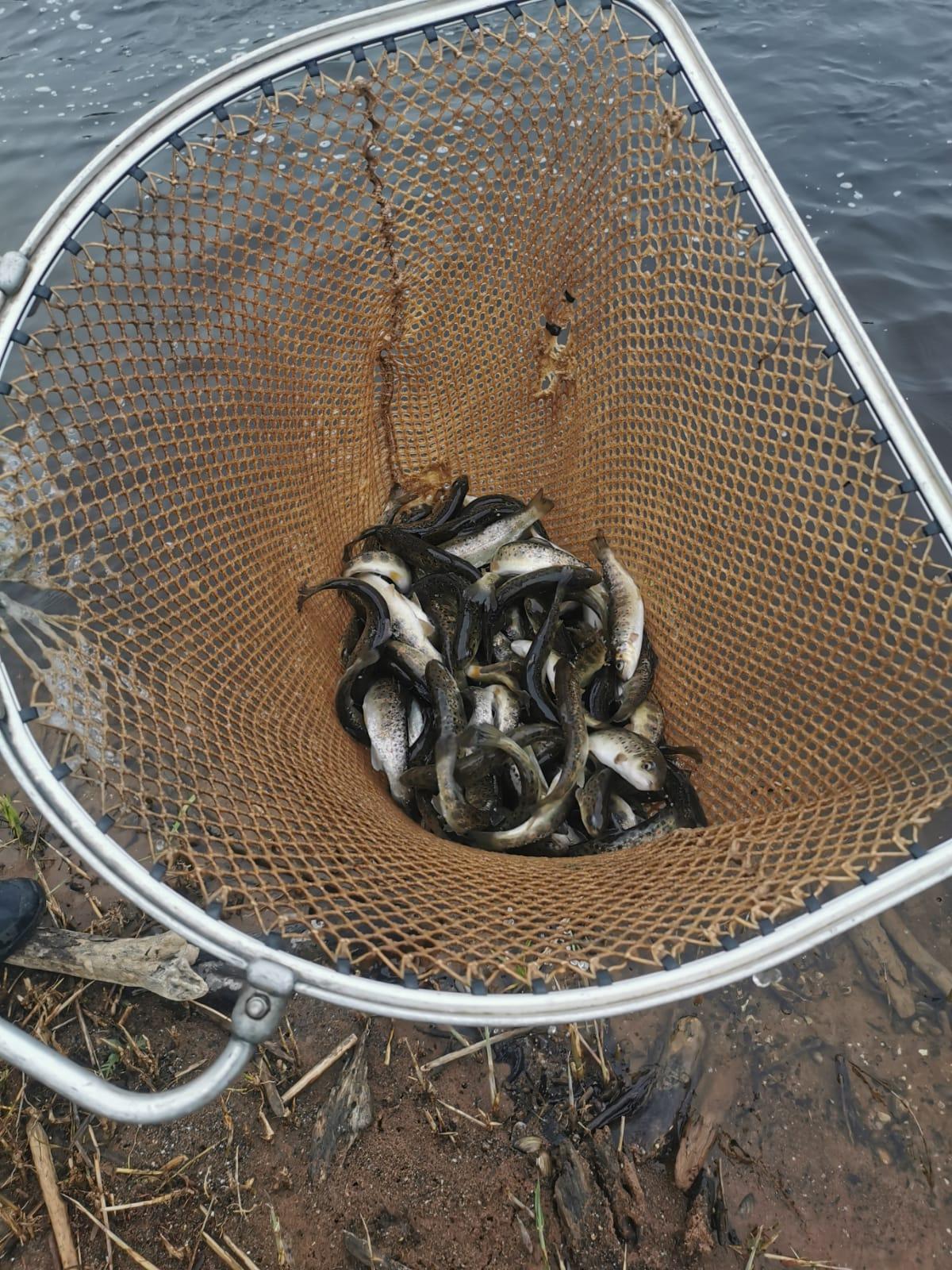 Taimiņu resursu papildināšana Salacas upes baseinā