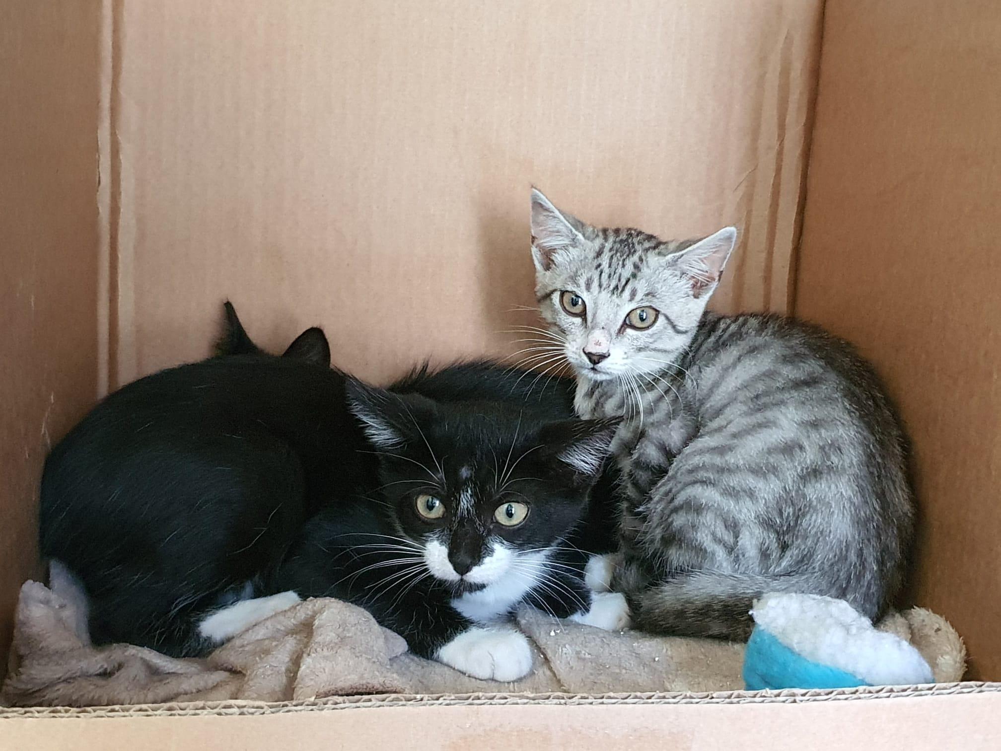 """Biedrība """"Dzīvnieku atbalsts"""" par saziedotajiem līdzekļiem veic kaķu sterilizēšanu"""